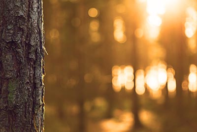tree-woods